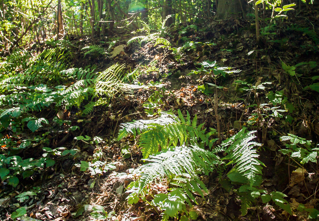 Der Waldboden wirkt wie ein Schwamm und lässt so das Regenwasser nicht einfach abfließen