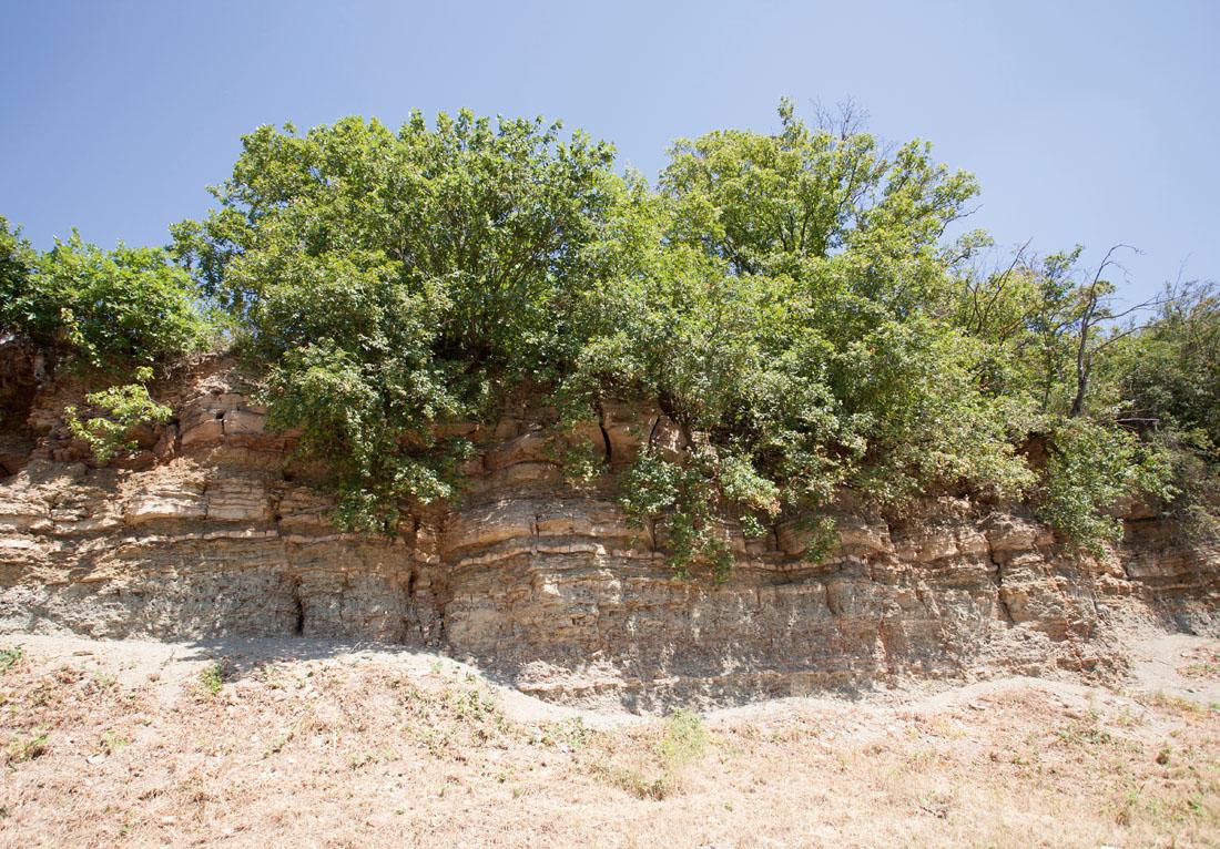 Felswand am Riedkopf