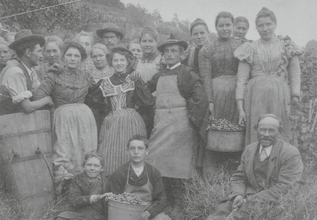 Familie Haag bei der Weinernte (Fotosammlung Stadtarchiv Heilbronn/Aufnahme: nicht bekannt)