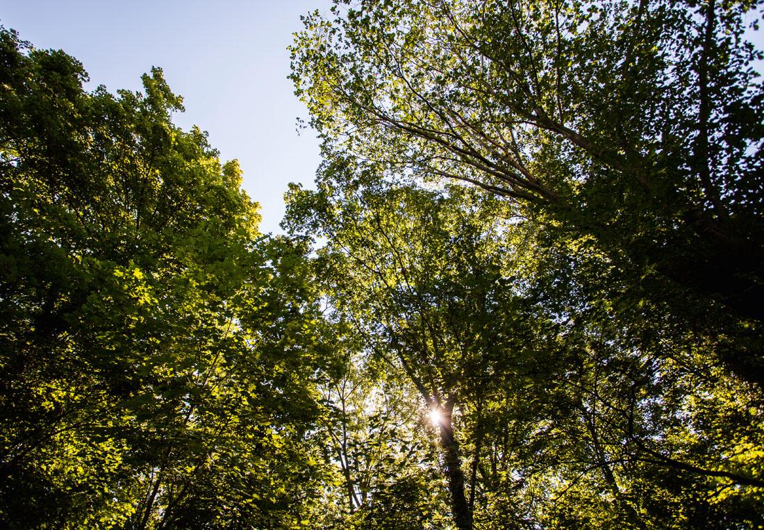 Blätterdach auf dem Wartberg
