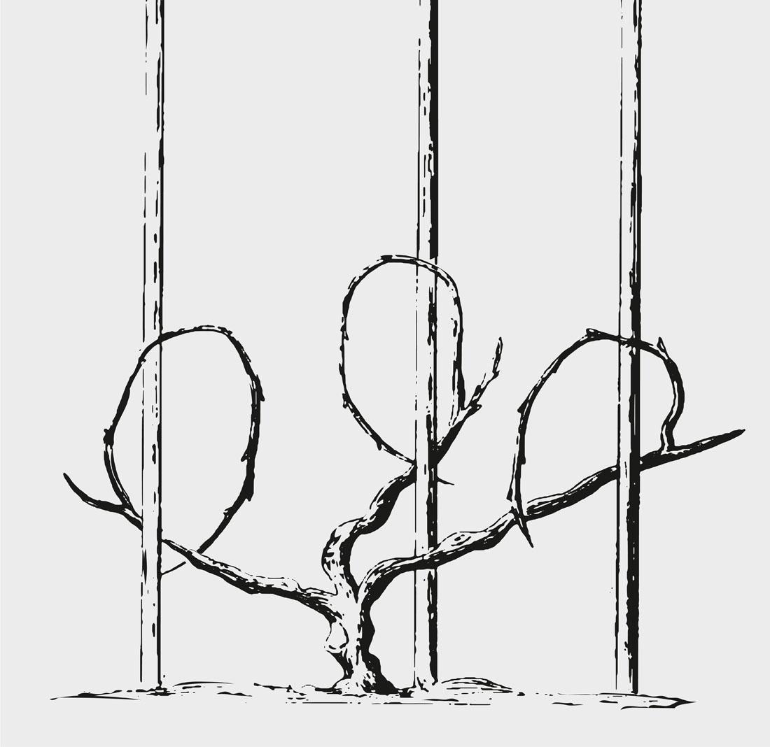 Drei-Schenkel-Erziehung
